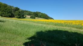 Wein- und kulinarischen Touren in Kanton Schaffhausen